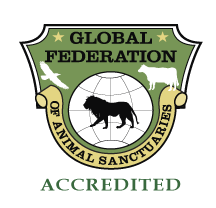 The ARCAS Wildlife Rescue Center is accredited by the Global Federation of Animal Sanctuaries as having met the highest standard in humane animal care.