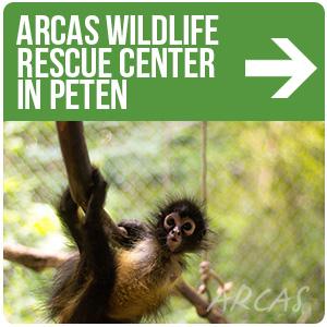 Centro de rescate de vida silvestre de ARCAS en Petén